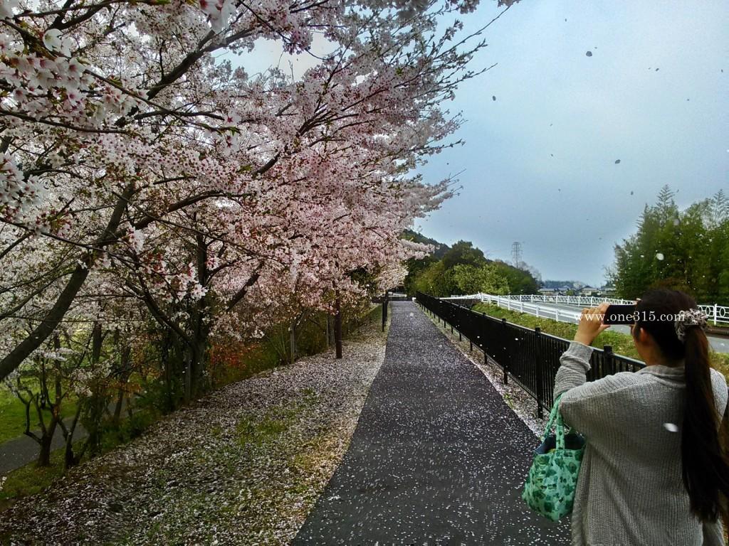 2016.04.10花見37滋賀県東近江市繖公園