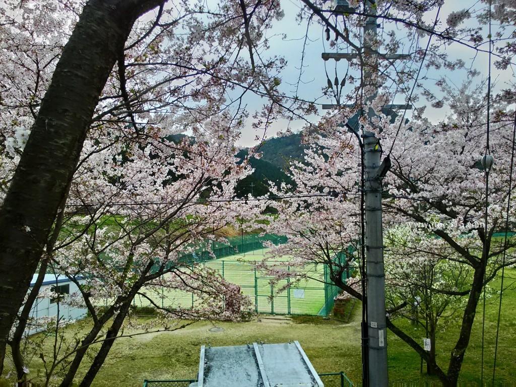 2016.04.10花見36滋賀県東近江市繖公園