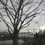 2018/01/21(日)午前 ソフトテニス・個別練習会