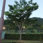 2018/05/26(土) 個別練習会・プラスワンソフトテニス