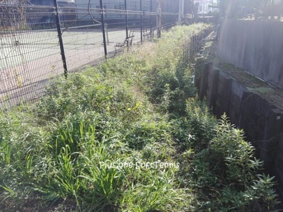 プラスワン・テニスコート 草刈り